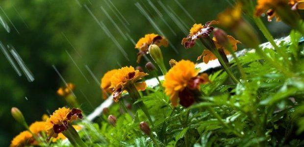 В Армении прогнозируются кратковременные дожди и грозы