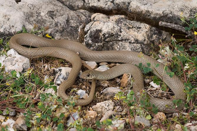 Comfort представлено виды змей в дагестане белье может